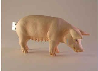 Porc-usb