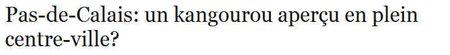 Kangourou-pas-de-calais