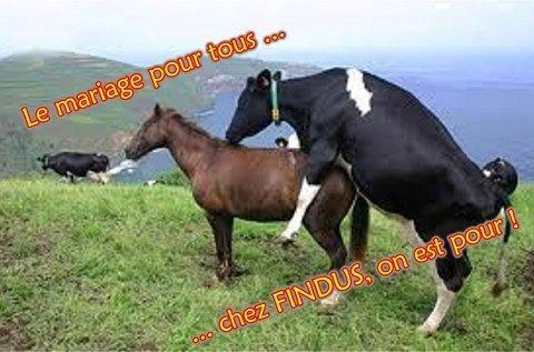Mariage pour tous les animaux