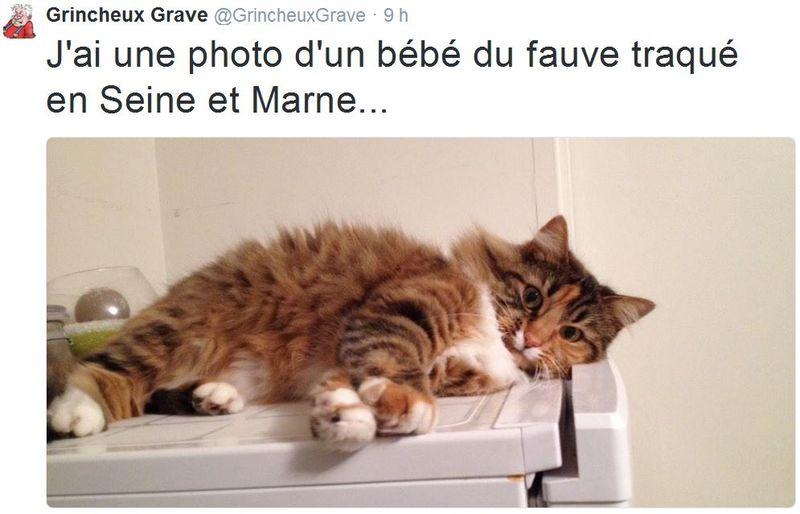 Le bébé du tigre de Seine-et-Marne