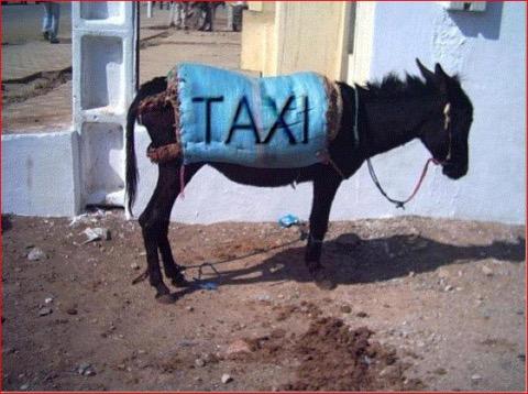 Âne taxi