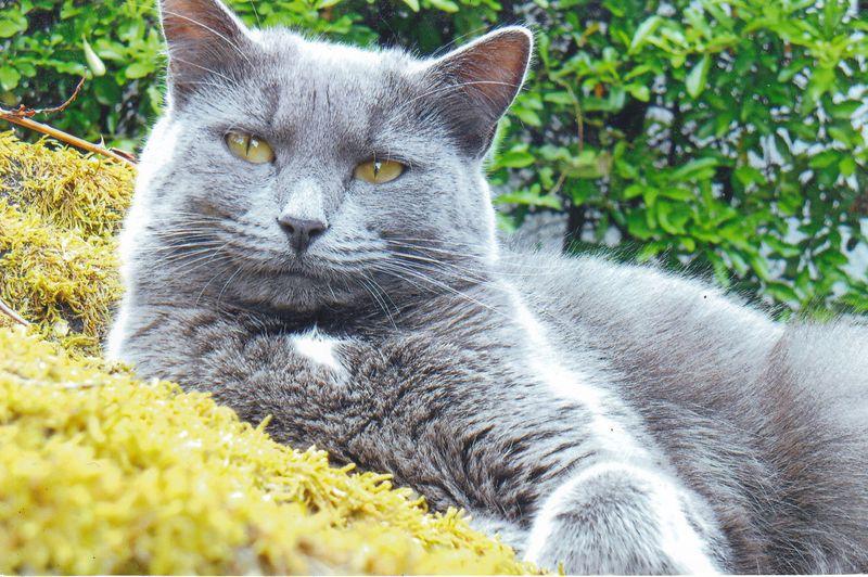 La chatte de grincheux grave