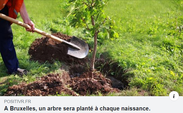 Bruxelles un arbre planté à chaque naissance
