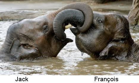 Elephants0001
