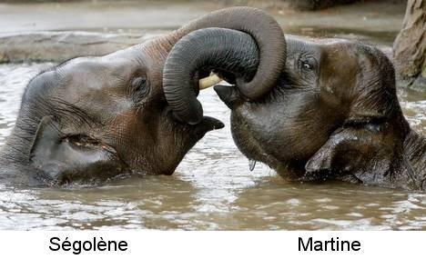 Elephants003
